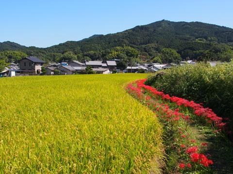 20140927asuka1.JPG