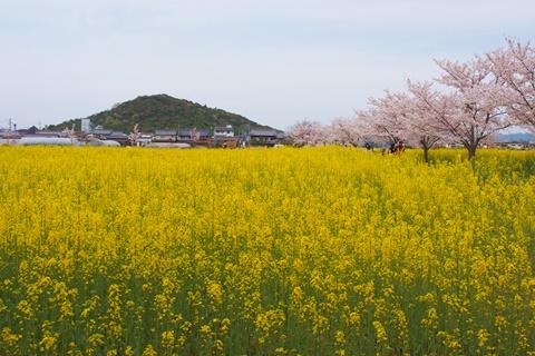 20160406daigo1.JPG