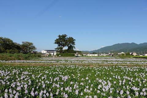 20160831motoyakushiji2.JPG