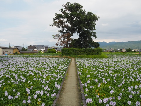 20170830motoyakusiji4-1.JPG