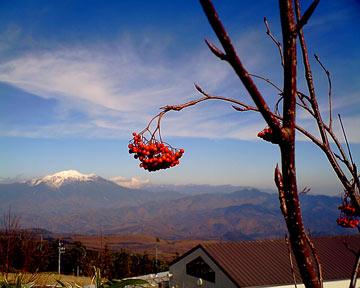 20081103sinsyu-toy2.jpg
