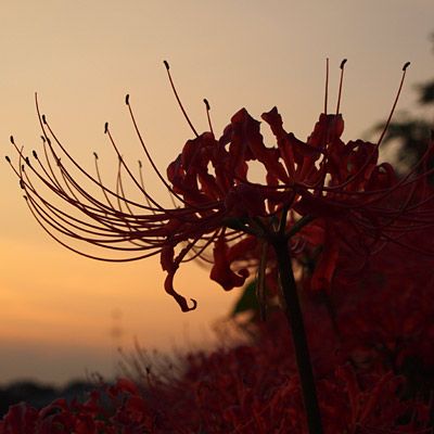 20090925asuka3.jpg