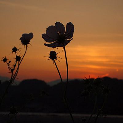 20090925asuka4.jpg